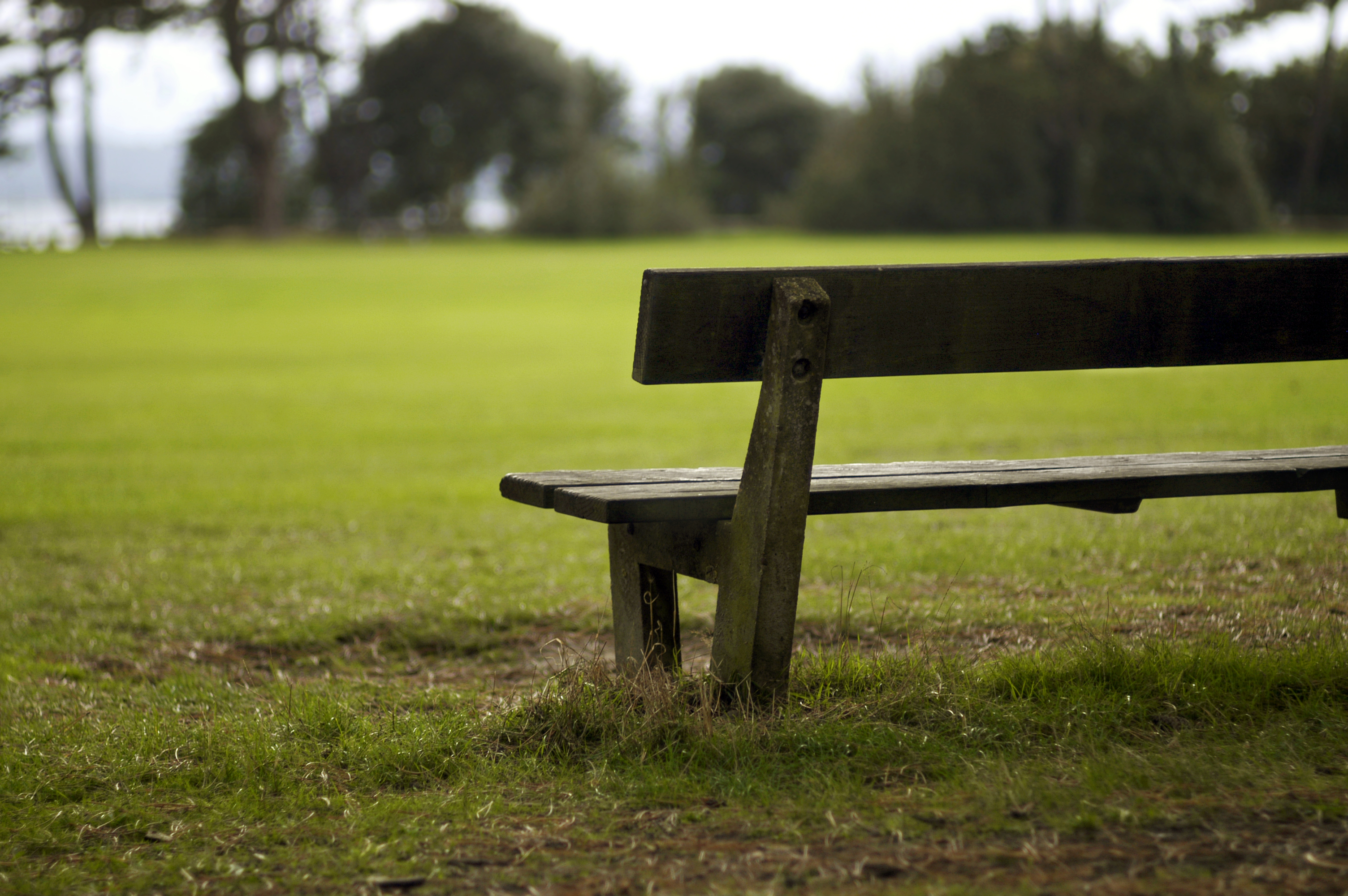 Solitary bench in park